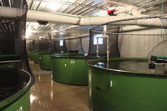 AquaBounty's Prince Edward Island facility in Canada. Photo courtesy AquaBounty Technologies Inc.