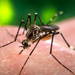 The Facts About Zika