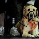 Trump Didn't Cut Canine Program