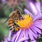 Inhofe Misleads on Bees