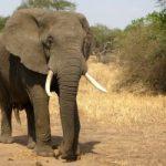 False Caption on Dead Elephant Photo