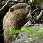 Groundhog Friday