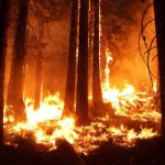 Warming to Blame for Western Wildfires?